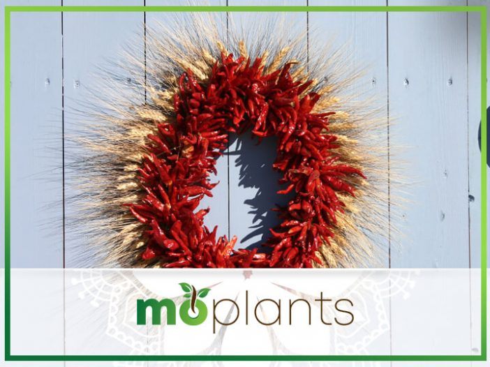 Free Sustainable Christmas Decorations From Your Garden
