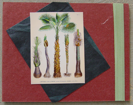 Palms With Band Note Card