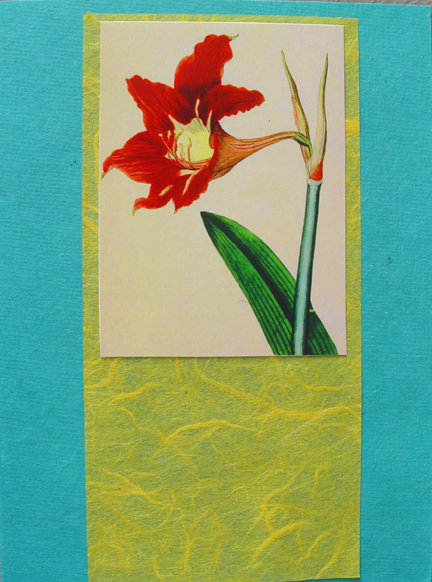 Daylily on Turquoise Note Card