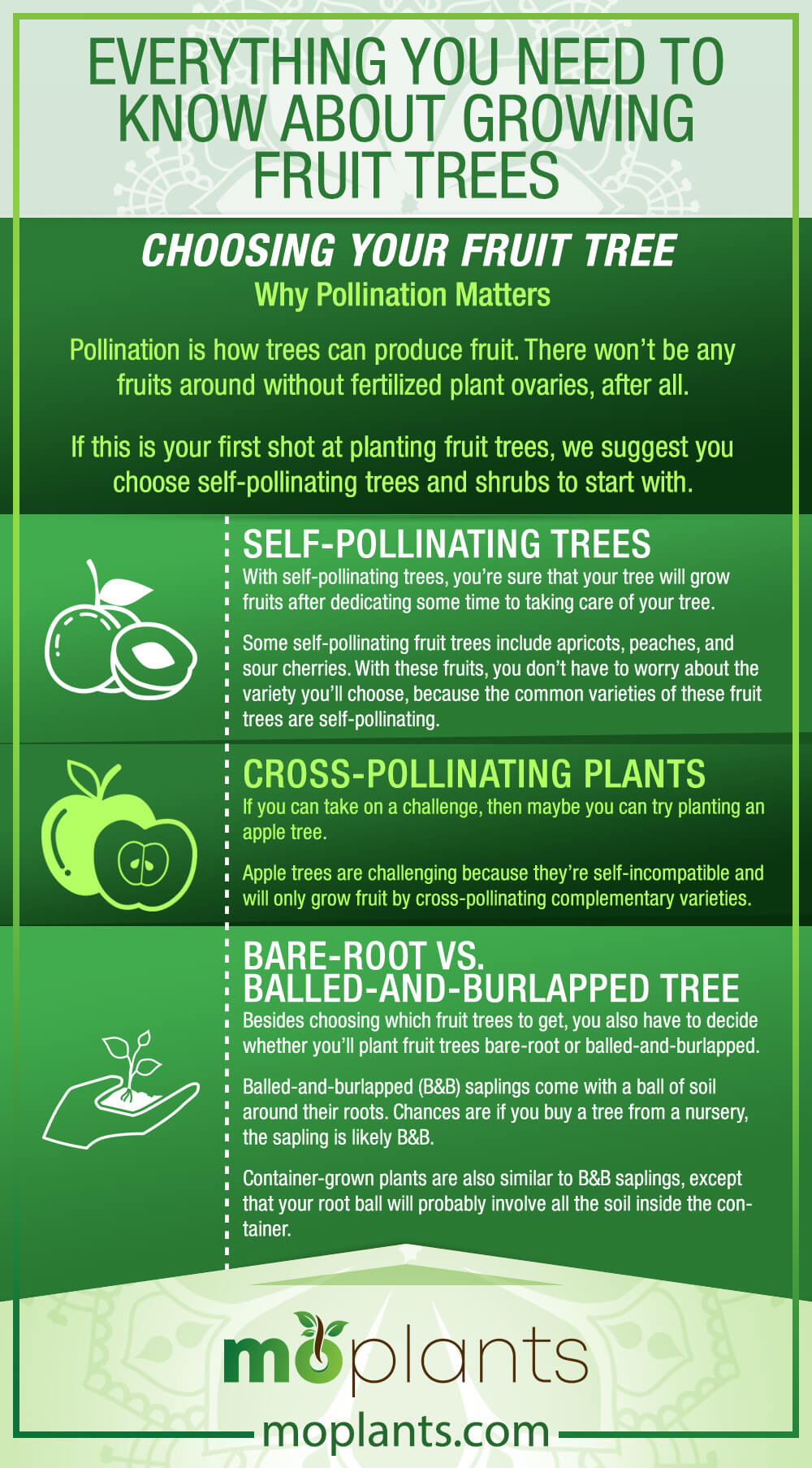 Everything You Need To Know About Growing Fruit Trees Mo Plants