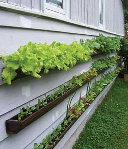 Best Ideas for Small Budget Gardeners