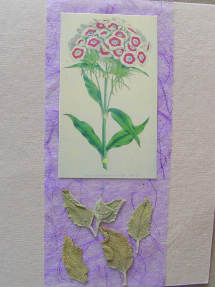 Cineraria on Lavender Note Card