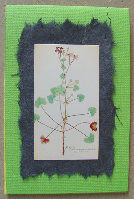 Pelargonium on Green Note Card