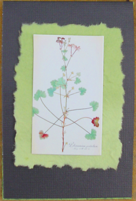 elargonium Note Card