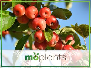 Everything You Need To Know About Growing Fruit Trees