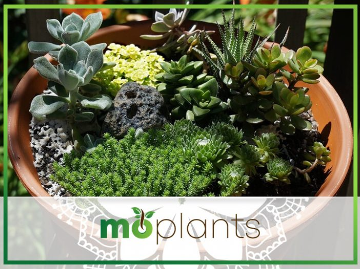 Mini Potted Landscape Gardens for Apartment Dwellers