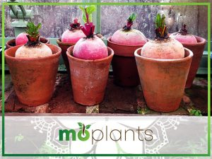 Easy Vegetable Container Gardening for Beginners