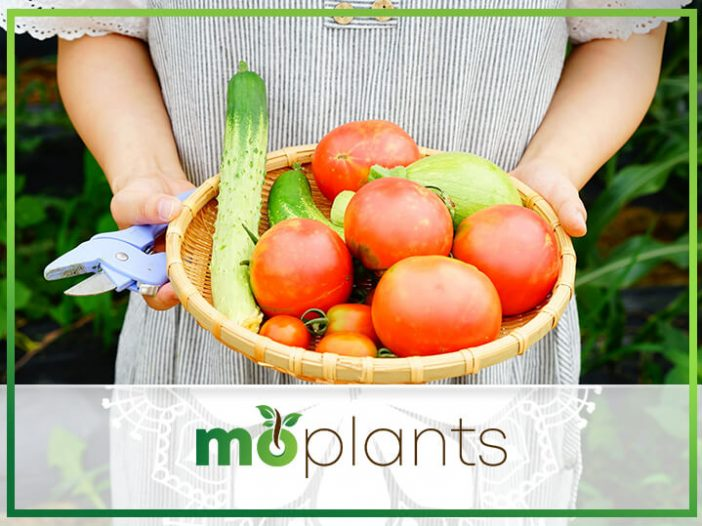 Vegetable Gardening Tips for Beginners: How to Grow Almost Anything