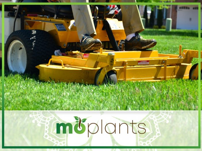 When to Fertilize New Sod: The Ultimate Guide for a Properly-Mowed Lawn