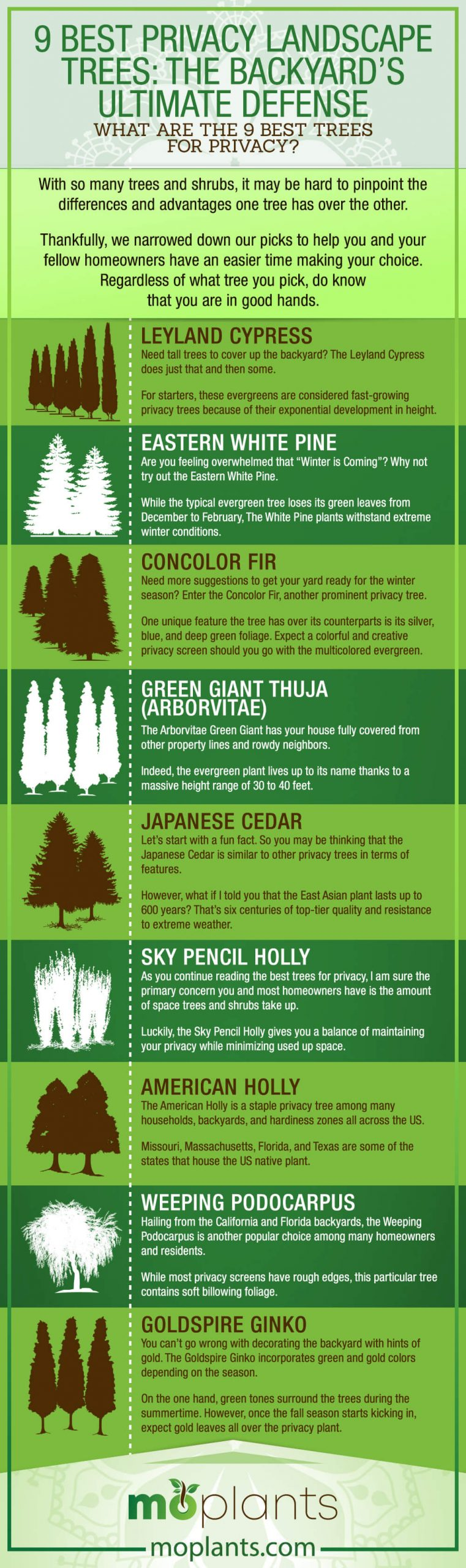 9 Best Privacy Landscape Trees The Backyard S Ultimate Defense Mo Plants
