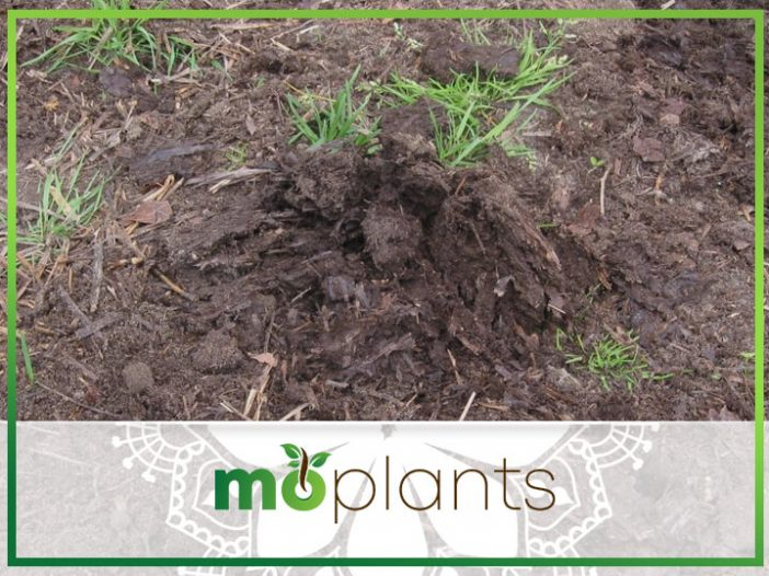 Is Horse Manure Good for Vegetable Gardens?
