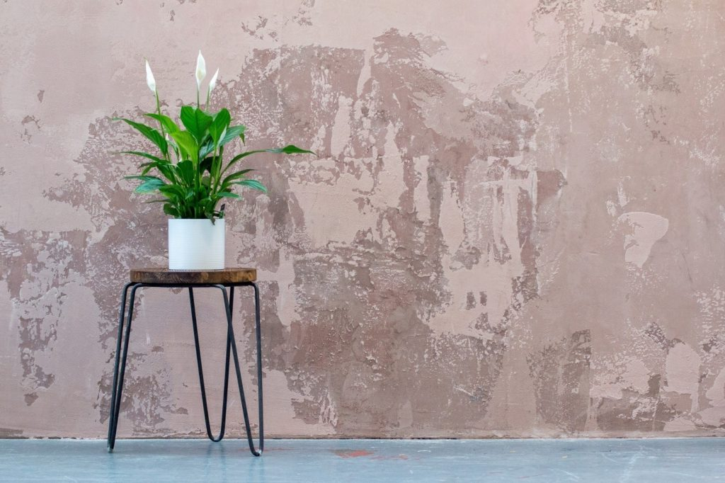 Grow peace lily indoors