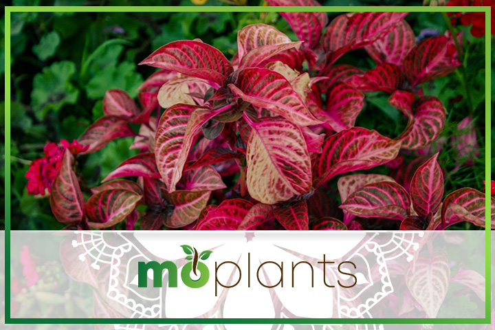 How to solve common croton plant problems