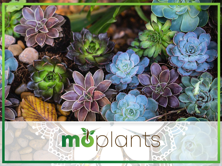 Complete Guide on How to Grow and Care for Succulents